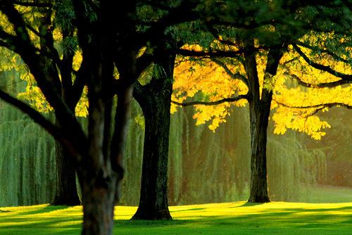 Weeping Willow Park, Aurora, Illinois