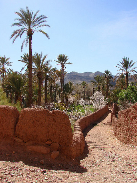 Road in the oasis in Draa valley, Morocco