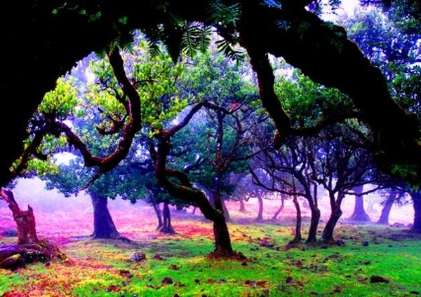 Mystical Forest, Madeira Island, Portugal