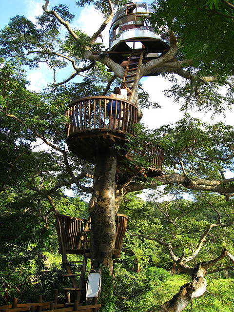 Beach Rock Tree House in Okinawa Islands, Japan