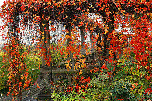 Autumn Vines, Wineberg, Germany