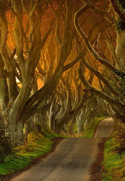 "The Dark Hedges in Ballypatrick Forest, Co Antrim, N. Ireland .]]>"" id=""IMAGE-m6w5beiRAF1r6b8aao1_500″ /></noscript><img class="