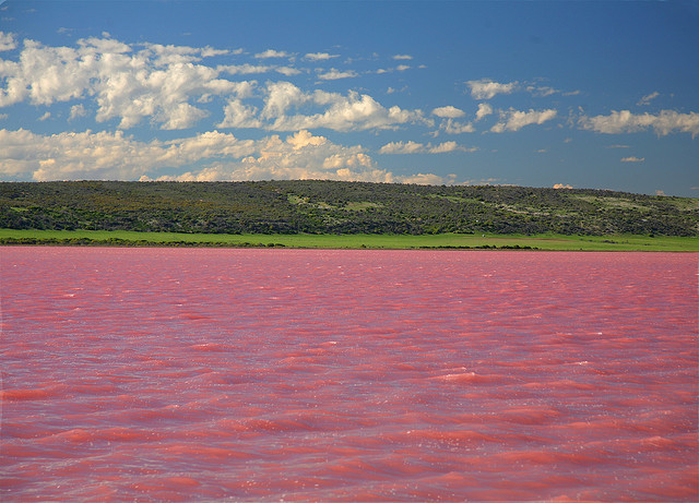 The Pink Lake in the Goldfields-Esperance region of Western Australia