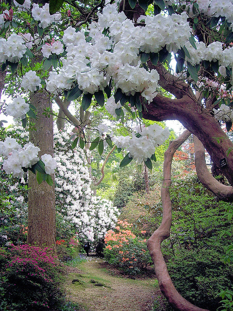 Leonardslee Gardens in West Sussex, England