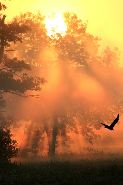 Raven Sunset, Warmbronn, Germany
