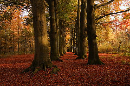 Autumn Forest, The Netherlands