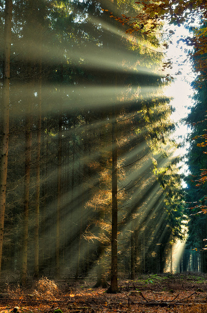 Sunray Forest, The Netherlands