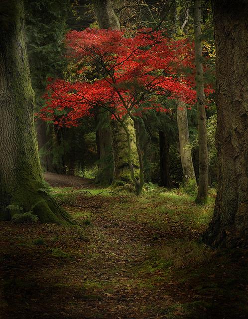 Autumn Tree, Scotland