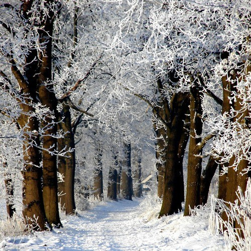 Snow Path, Baden-Wurttenberg, Germany
