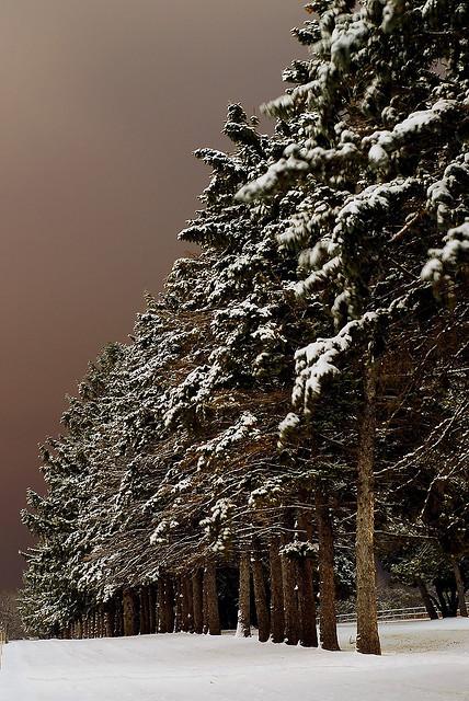 Snow Forest, Iowa
