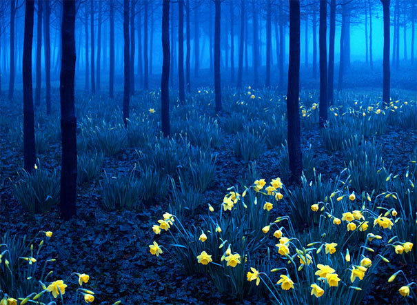 Blue Forest, North Greenwich, England