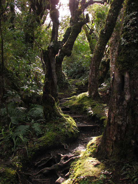Goblin Forest in Egmont National Park, New Zealand
