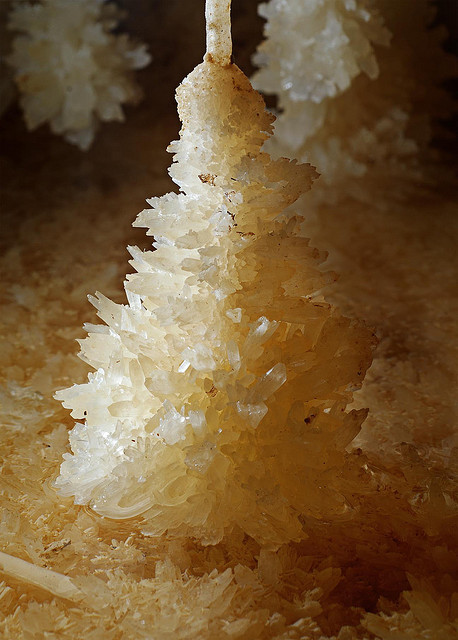 Aragonite crystal pendants inside Glowworm Cave, New Zealand