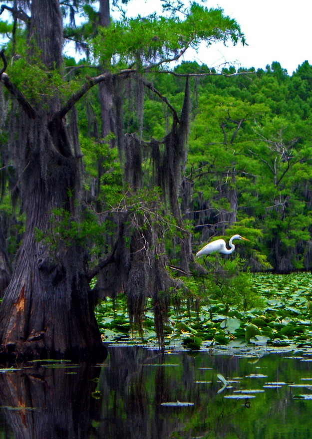 Caddo Lake State Park in Texas, USA