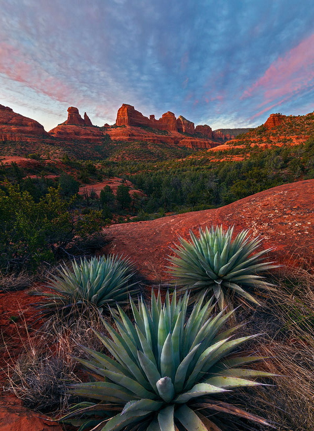 Agave on the rocks, Sedona - Arizona, USA