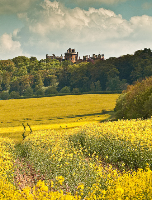 Belvoir Castle overlooking the yellow fields of Leicestershire, England