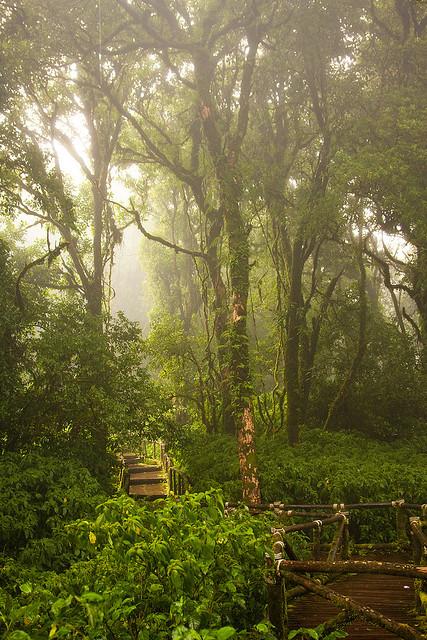 The misty jungle, Doi Inthanon National Park, Thailand