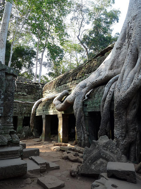The ruins of Ta Prohm in Siem Reap / Cambodia
